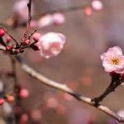 婚活の香り・春の訪れを告げる